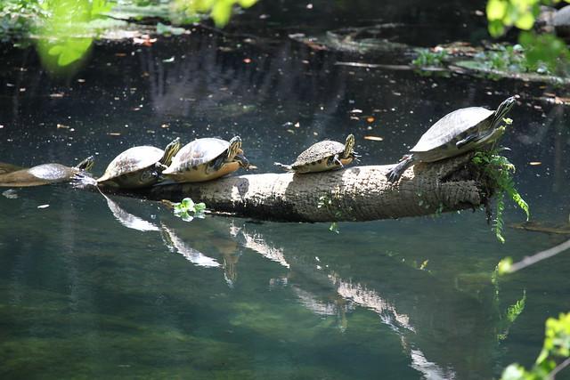 Turtle Takeoff