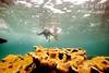 Bimini – u korálů, foto: Atmoji ©WildQuest