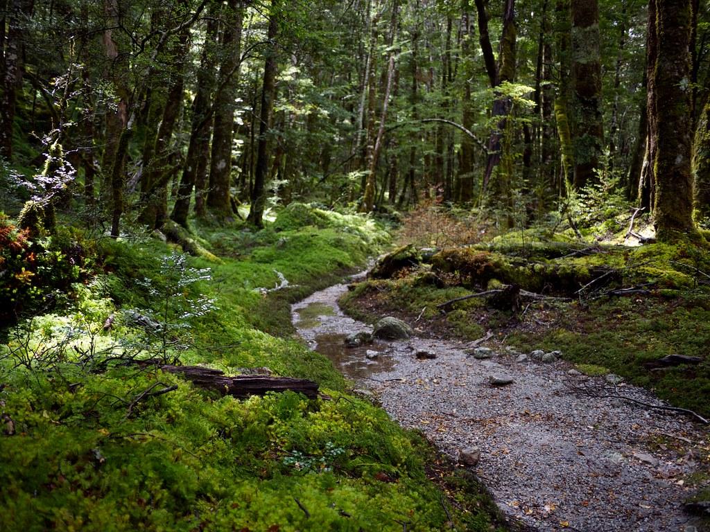 NZ Forest