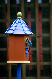 130312_ Our new bird house has a visitor no3 | by Headphonaught