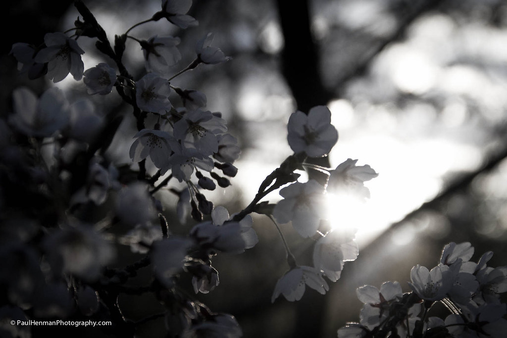 Bright blossom by Paul Henman