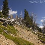 Trail to Bear Mountain Overlook