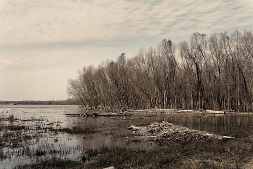 water trees winter seasons nature louisiana landscape canonef28135mmf3556isusm 28mm scotlandville riverbank mississippiriver scottsbluff southernuniversity river mrgreenjeans gaylon gaylonkeeling
