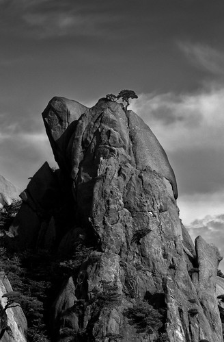 Crooked tree on rock top