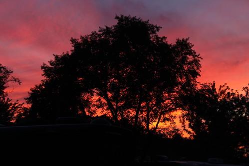 sunset ny newyork tree lakeerie westfield koa