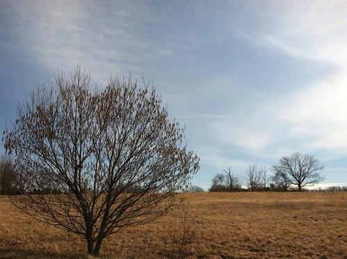 trees winter sky field hiking pennsylvania memoriallakestatepark