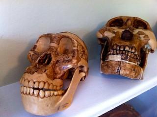 Skulls CU