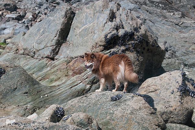 5/12/C tasku - mountain goat