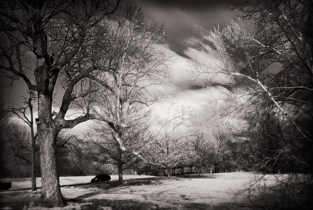 Cherokee Park Shot with IR Hoya Filter - Louisville, Ky.