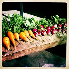 Carrots, radishes, plus a sink full of lettuce. #homegrown