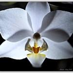 Orchid in frozen light