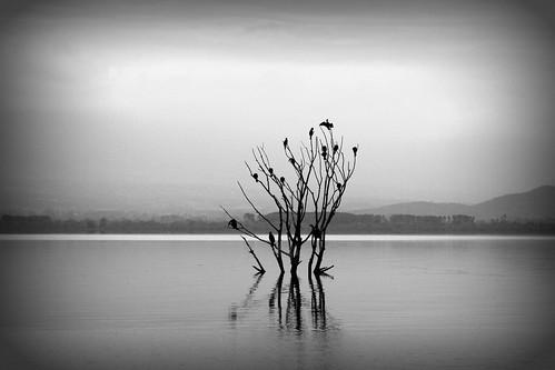 cuckove canon sigma dojran lake cormorants cormorant birds landscape macedonia monochrome 40d emilchuchkov emilchuchkovphotography
