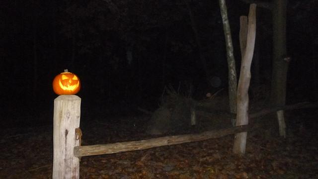 Halloween Pumpkin Night Forest 🎃