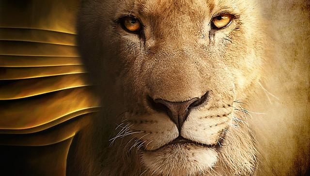 lion king . . .