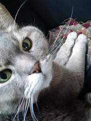 cute airbnb cat in Tokyo