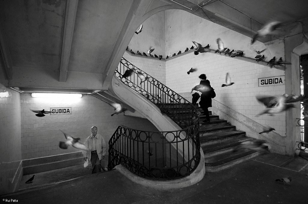 Ζακ Πρεβέρ - πώς ζωγραφίζεται ένα πουλί