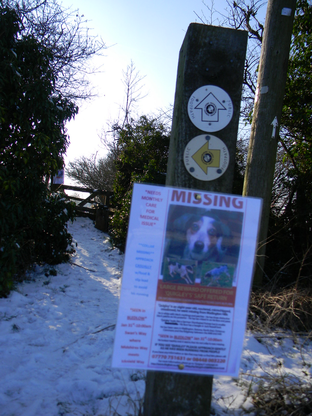 Missing... ....answers to the name Quigley. (Posters everywhere.) Saunderton to Bledlow