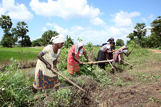 Women working in a field   by World Bank Photo Collection