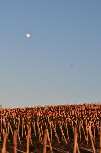 sunset moon corn