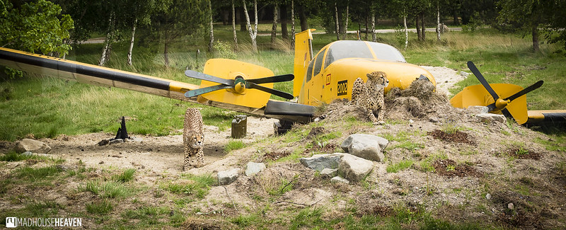 Safaripark Beekse Bergen - 0023