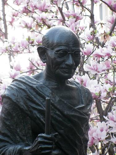 Gandhi in Spring   by edenpictures
