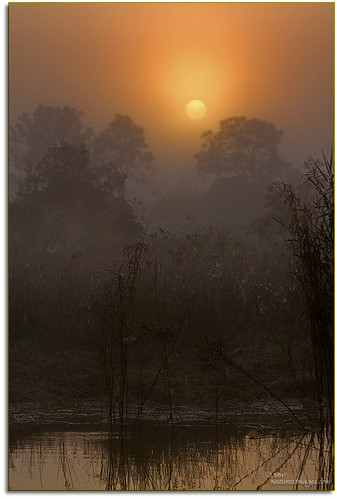 sunrises professionalphotographer floridaimages photoworkshops phototours wildlifemanagementareas phototourguide jmwnaturesimagescom audiovisualphotopresentations