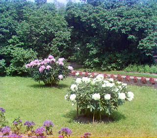 Prokudin-Gorskii Trichrome Composite Garden Flowers