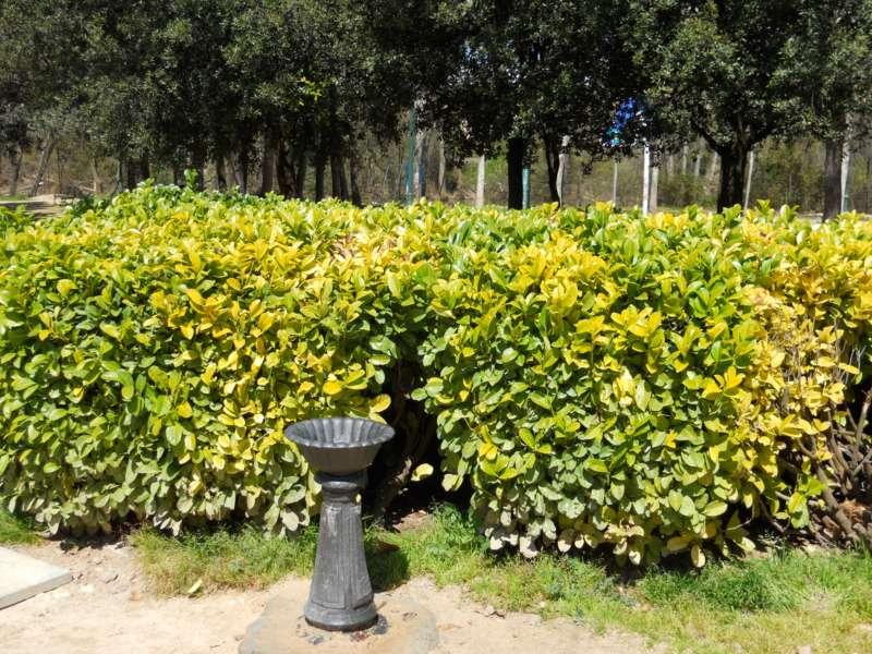 Fuente habitual en parques