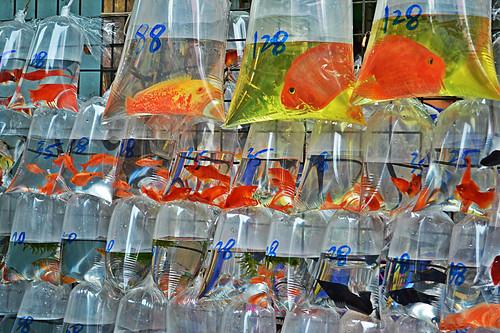 Fish Market, Mong Kok   by MrT HK