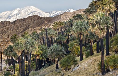 Coachella Valley Preserve System