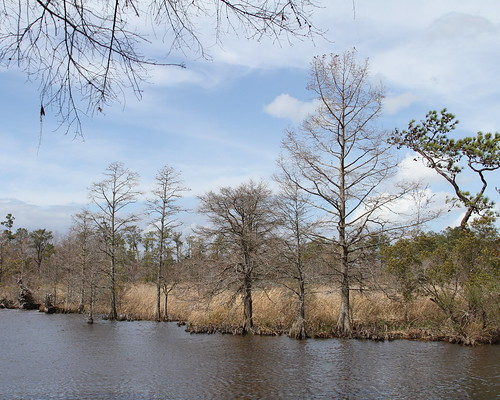 creek virginia bluesky swamp cypress marsh virginiabeach hamptonroads baldcypress mundenpoint mundenpointpark