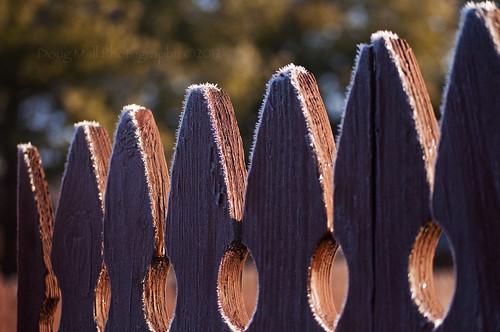 morning winter sunrise fence frost frosty backlit hff nikond5000 fencedfriday dougmall kindalikesaltonamargaritaglassno