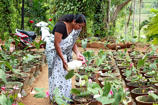 A woman tends to plants in a nursery | by World Bank Photo Collection