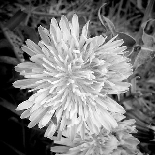 Blüte | by bebal