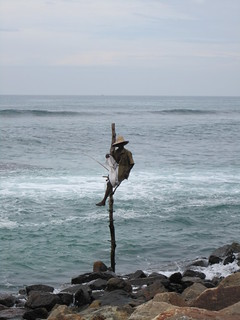 Midigama, stilt fisherman