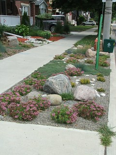 Sedums and whooly thyme on a boulevard