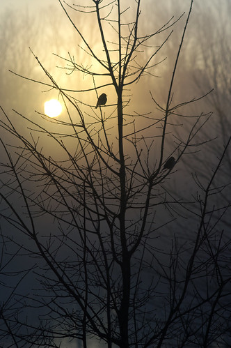 morning tree bird fog sunrise northcarolina