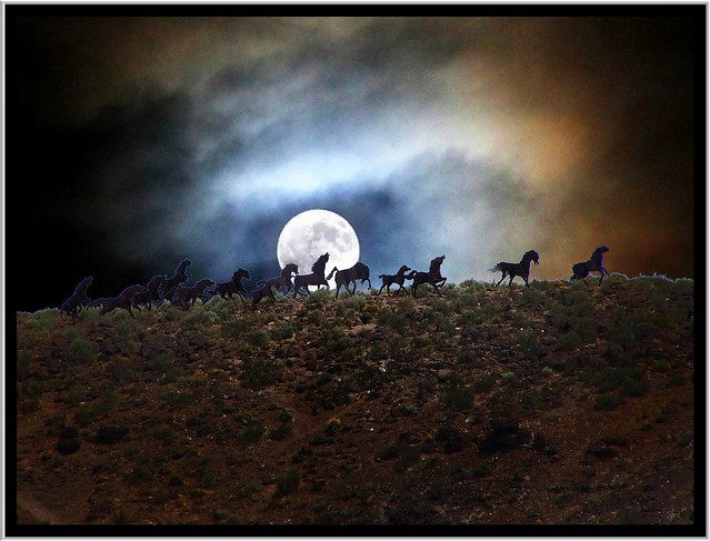 Wild Horses ~ Washington State ~ USA ~  Series Going Home to Toronto Canada
