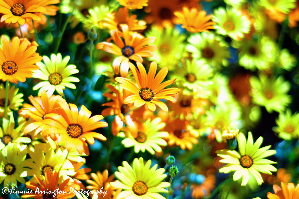 Cellophane Flowers Of Yellow And Green Jimmie Arrington
