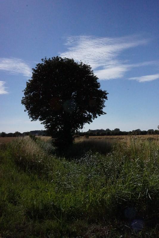 Kaedeby-Haver-2014-07-17 (2)