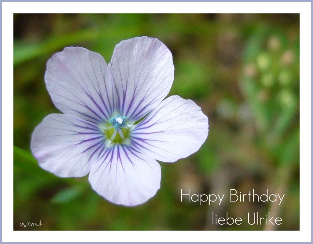 Ganz Herzliche Glückwünsche Zu Deinem Geburtstag Flickr
