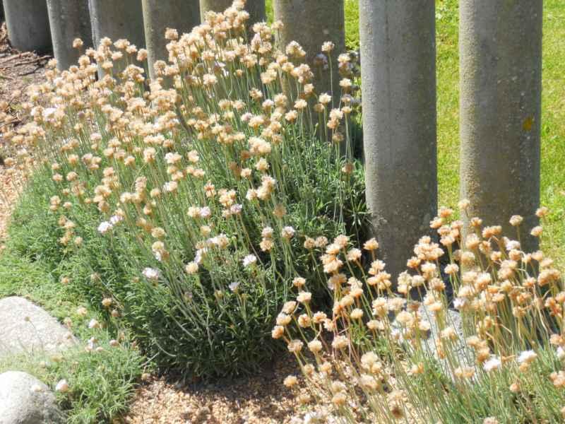 Jardin con plantas y piedra decorativa 9