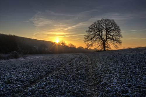 uk england sun cold tree birds sunrise unitedkingdom ground stevenage hdr canon24105mm canon450d coldandfrostymorning chesfield
