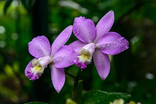 130428-BotanicGrarden-076 | by TanoyPhoto