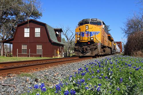railroad columbus up train texas tx unionpacific ge bluebonnets springtime freighttrain coloradoriverbridge barnhouse gevo texasstateflower es44ac sunsetroute megew