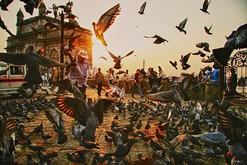 travel india tourism fishing pigeons lifestyle mumbai monuments