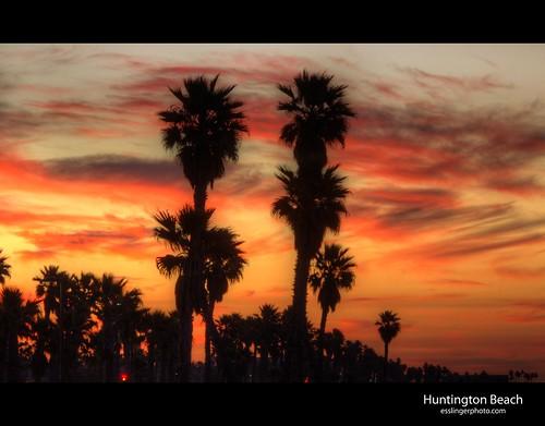 california trees orange usa ski beach sunrise huntington palm