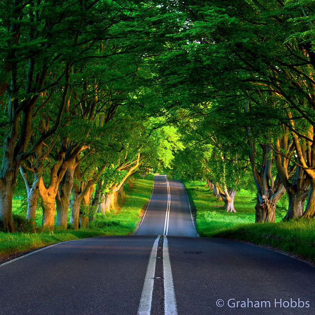 Kingston Lacy beech avenue in May - re-edited for Flickr