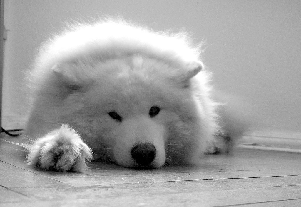 Hund: Relax ...
