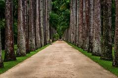 Botanical Garden Rio de Janeiro Brazil